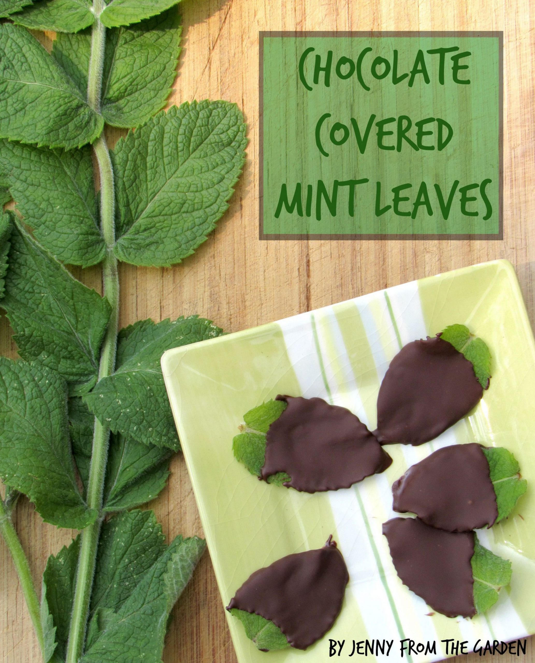 Chocolate Covered Mint Leaves {or what to do with all that mint ..