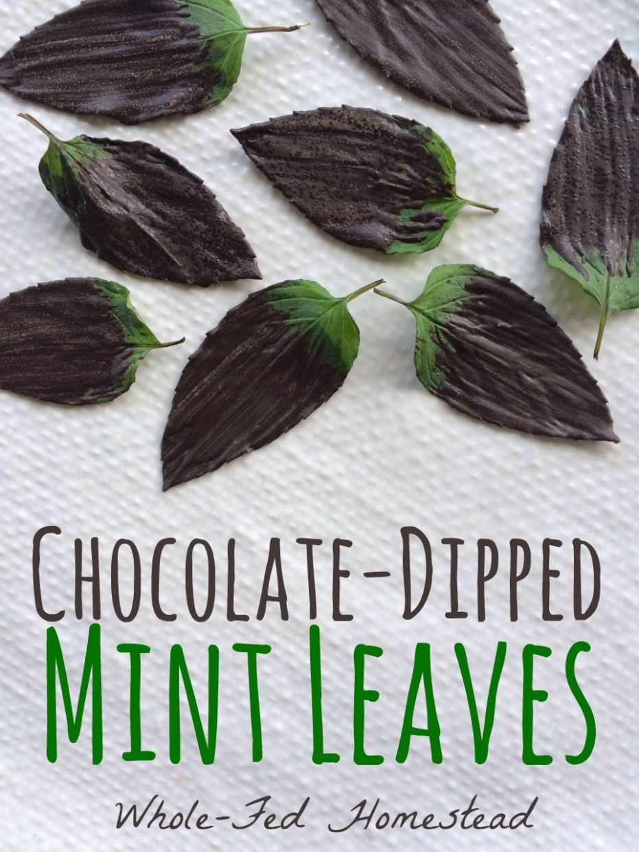 Chocolate-Dipped Mint Leaves... or, Chocolate After Dinner Mints ..