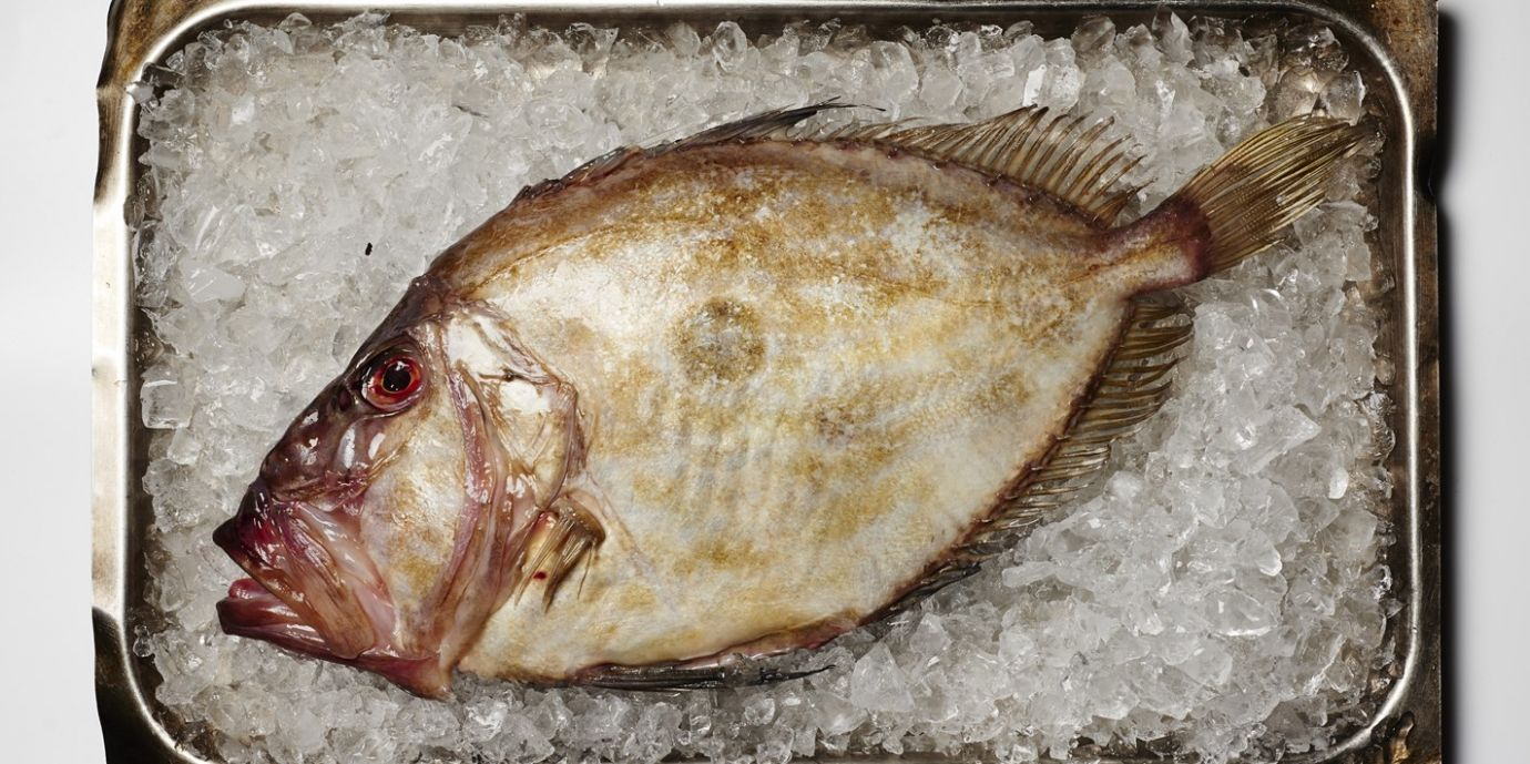 How to Cook John Dory - Great British Chefs - Recipes For Cooking John Dory Fish
