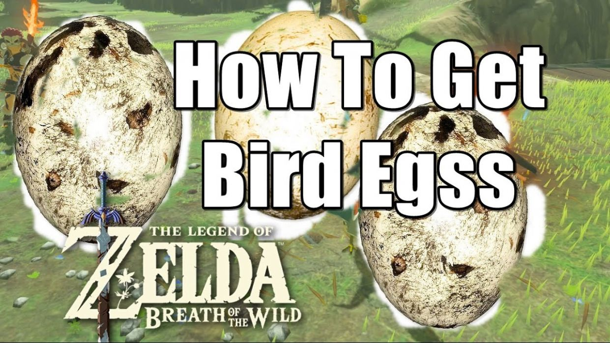 How To Get Bird Eggs in The Legend of Zelda Breath of the Wild
